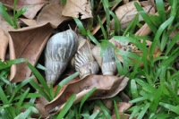 Botanical Garden - Snails